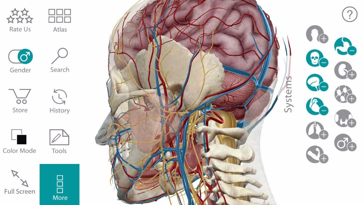 Programa 3d Atlas De Anatomía Humana En Español Para Windows ...