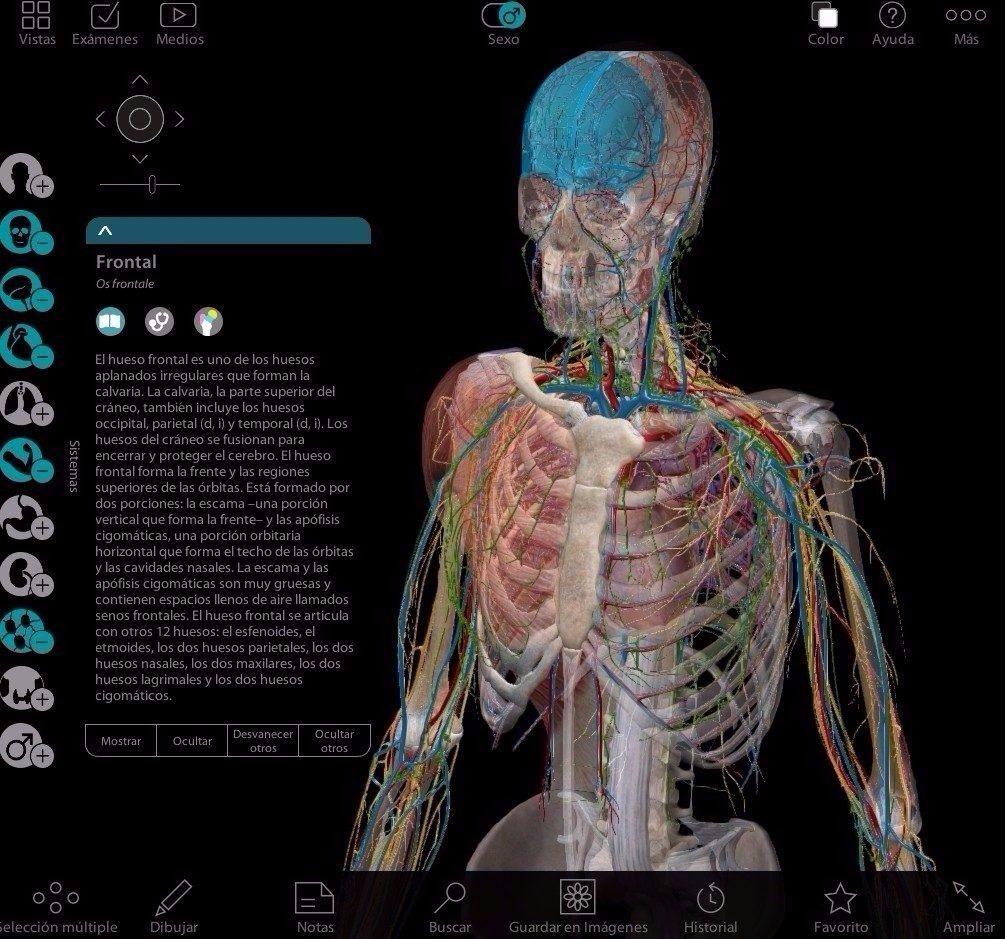 Magnífico Manera Fácil De Estudiar La Anatomía Festooning - Imágenes ...