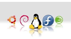programación web python perl php(pagina web tienda online )