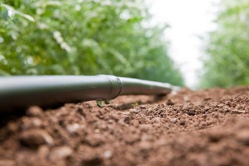 projeto de irrigação (agrícola, jardim) - consulte o valor