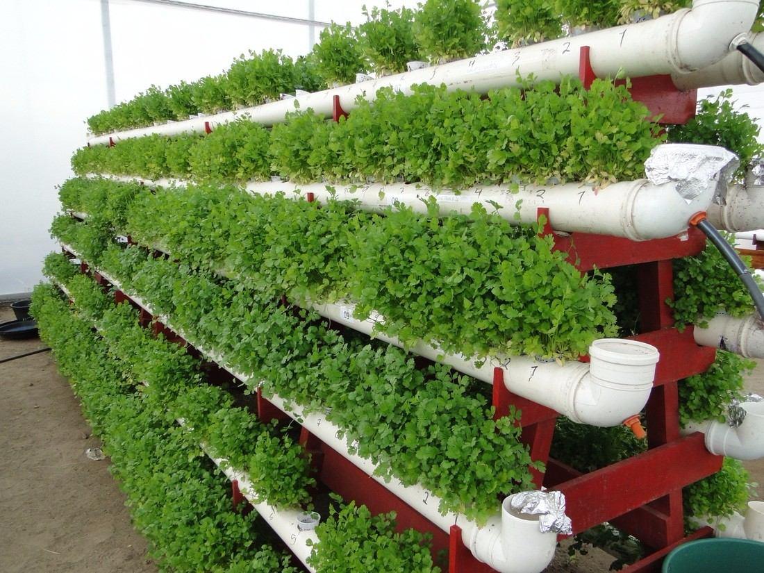 Projeto horta hidroponia org nica ecol gico quintal casa - Jardin hidroponico ...