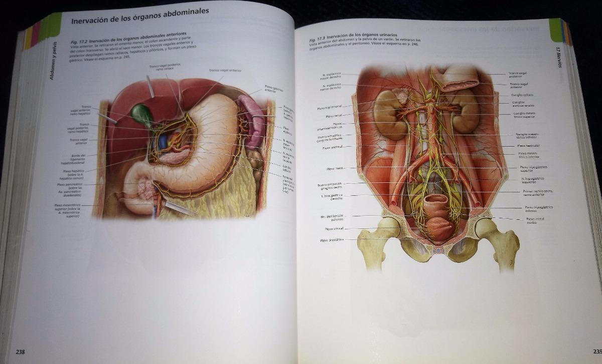 Dorable Cursos De Anatomía Y Fisiología De Cuny Patrón - Anatomía de ...