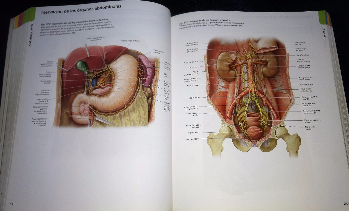 Prometheus. Atlas De Anatomía 1ed. - $ 415.00 en Mercado Libre