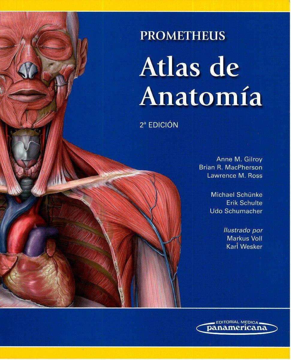 Lujo Ver La Anatomía Grises En Línea Gratis Componente - Imágenes de ...
