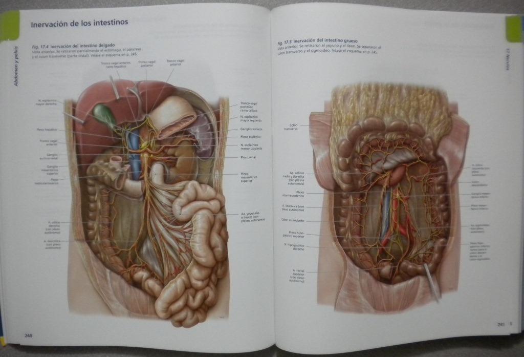 Único Cómo Dominar La Anatomía Patrón - Anatomía de Las Imágenesdel ...