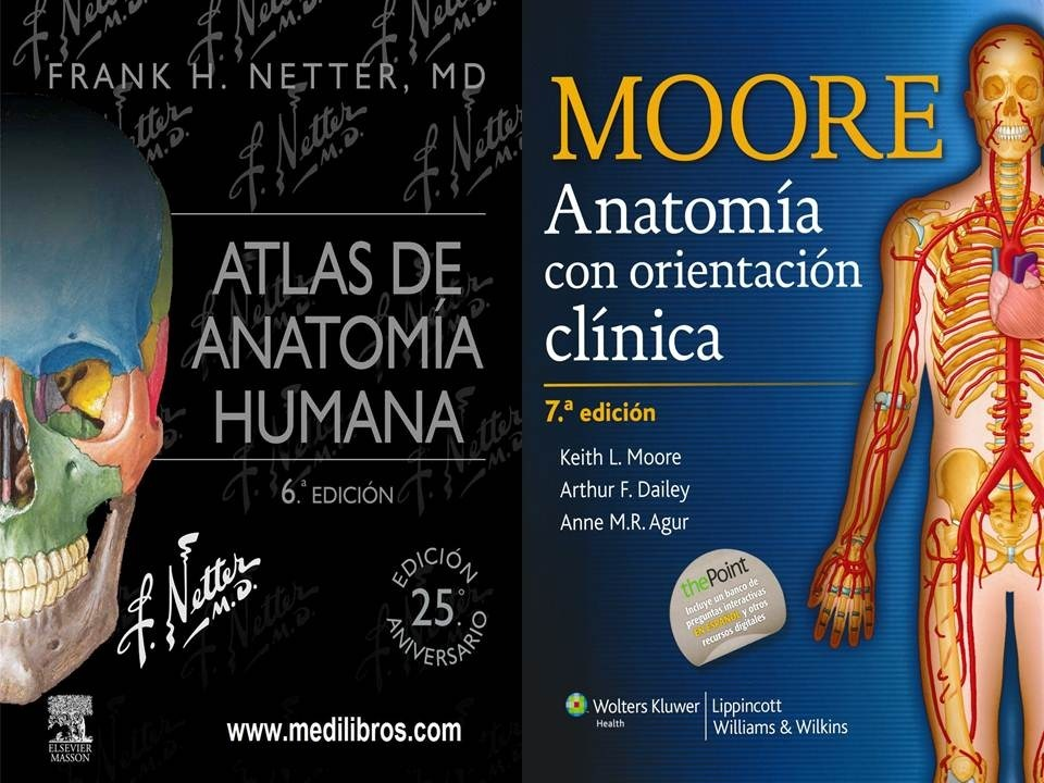 Vistoso Atlas Rederos De La Anatomía Viñeta - Anatomía de Las ...