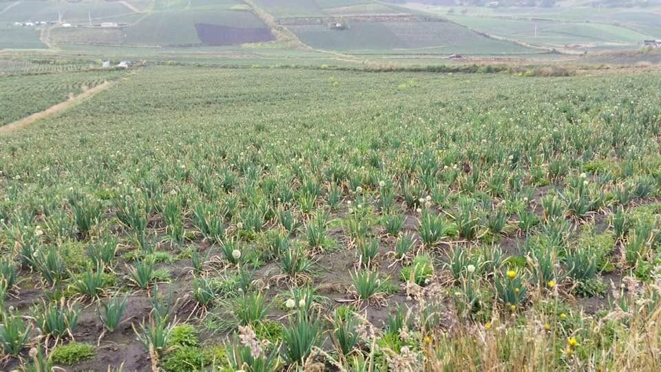 propiedad agrícola
