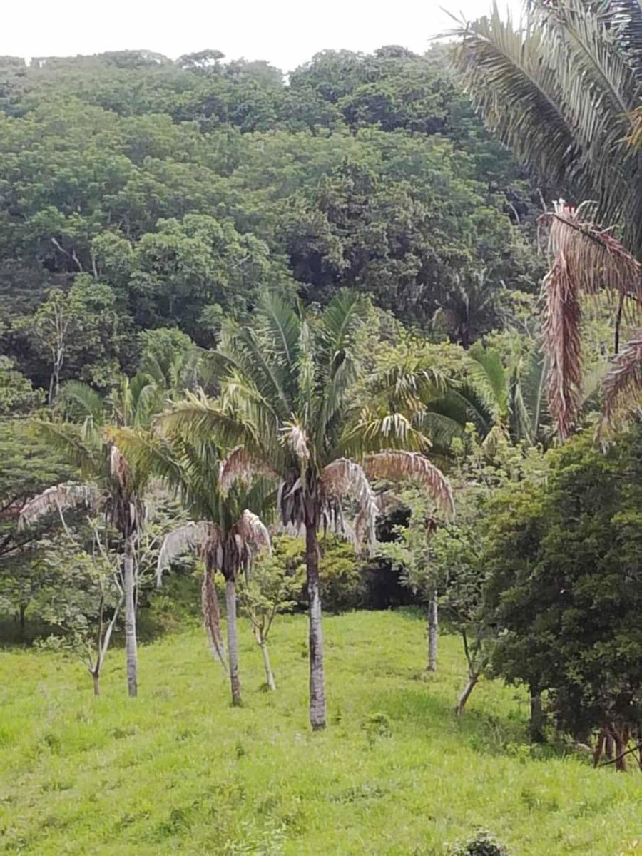 propiedad en la playa a 2.8 kilómetros de playa san juanillo