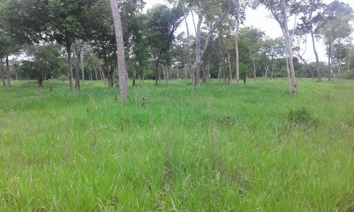 propiedad ganadera  zona concepcion - santa cruz - bolivia
