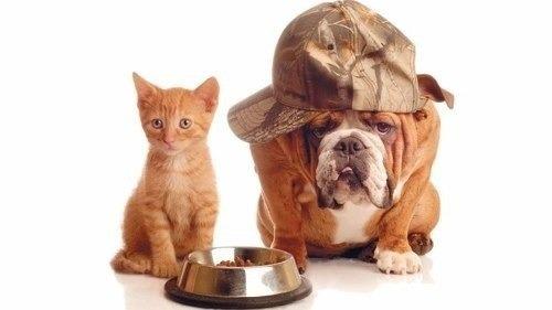 proplan gato urinary 7,5k + 1,5k  - envio gratis mr puppies!