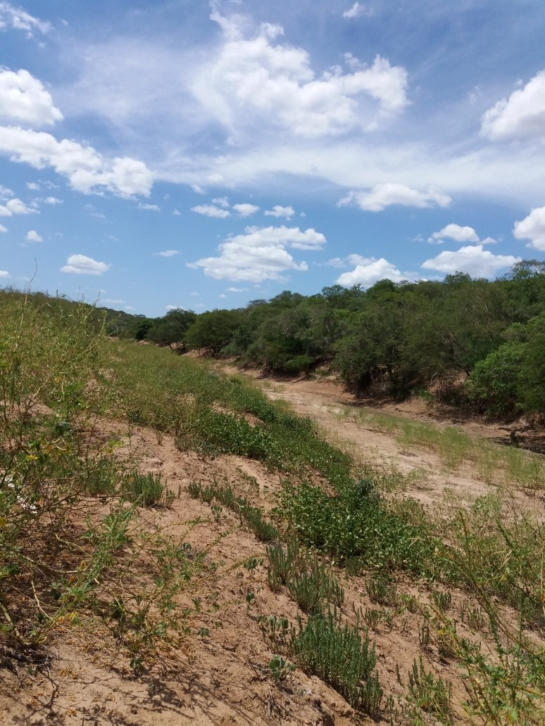 propriedade de 992 hectares no sul do piaui