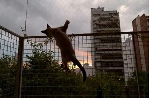 protección red balcón e instalación ventana pileta