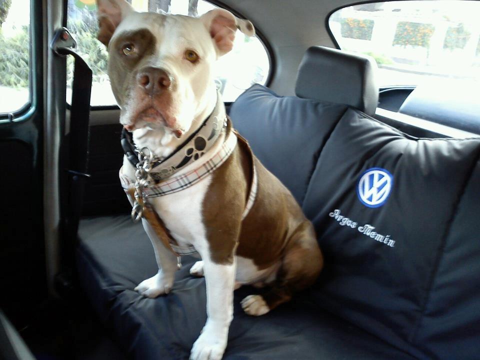 Protector de silla para el auto en mercado libre for Sillas para perros
