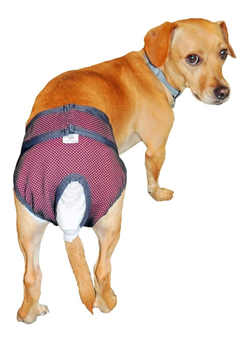 Protetor Higiênico P Fralda E Cio Cachorro Reutilizável N 3