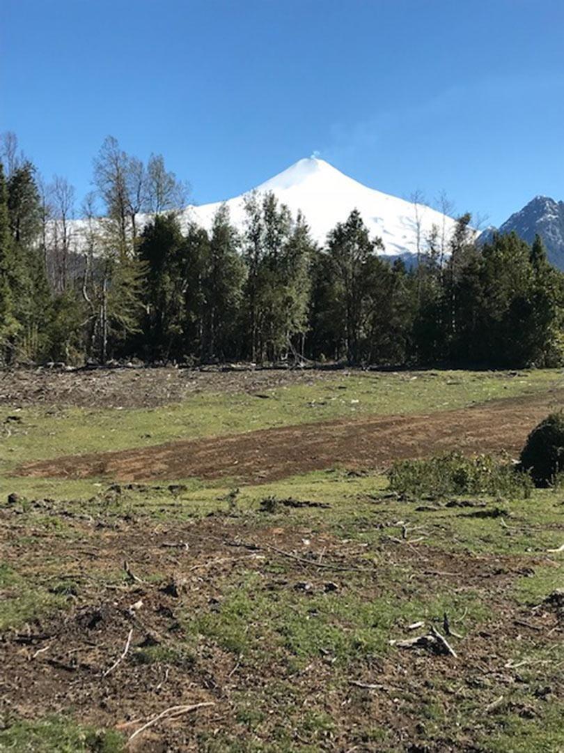 proyecto bosque de los nevados