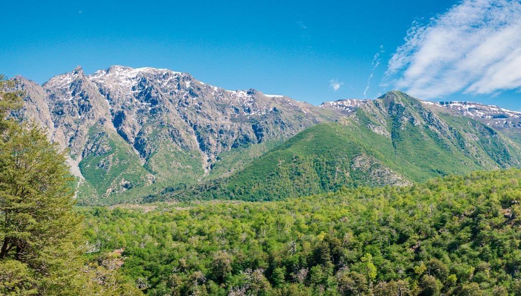 proyecto bosques de lircay