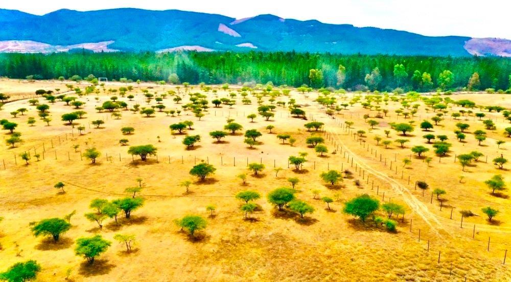 proyecto de parcelas vive san javier