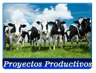 proyectos y planes de negocios para créditos