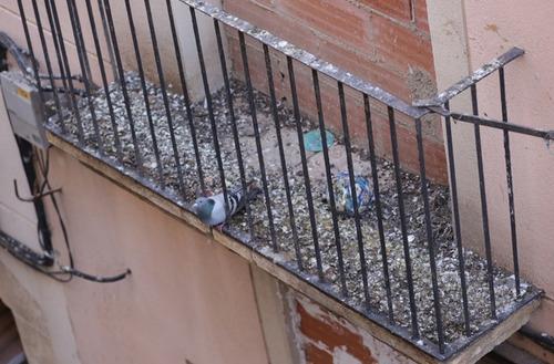 puas anti-palomas o ahuyentador de aves 20 metros