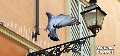 puas anti-palomas y aves 40 mts.