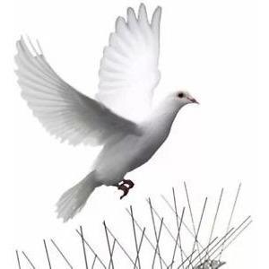 púas anti-palomas y aves 4mt largo (2cm separacion) ideal