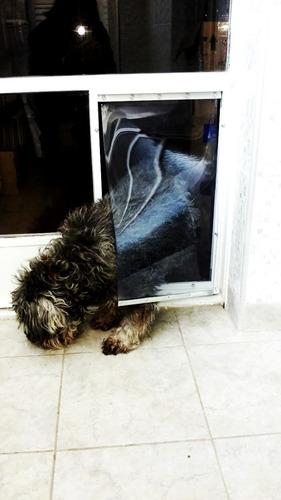 puerta para mascotas 30x50, con tapa fija