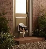puerta vaiven gato perro. swing 3