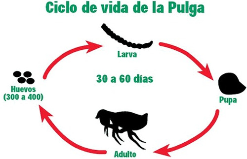 pulgas/control plagas,fumigaciones-fono 227090937