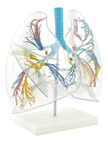 pulmão transparente de alta qualidade - med