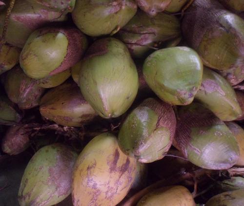 pulpa de coco fresca