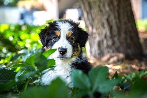 purina pro plan focus cachorro de razas pequenas de pollo y
