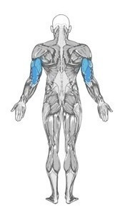 puxador tríceps bíc remada multi exs funcionais tipo polimet