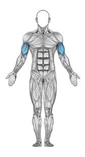 puxador tríceps funcional multiexercitador utiliza em polias