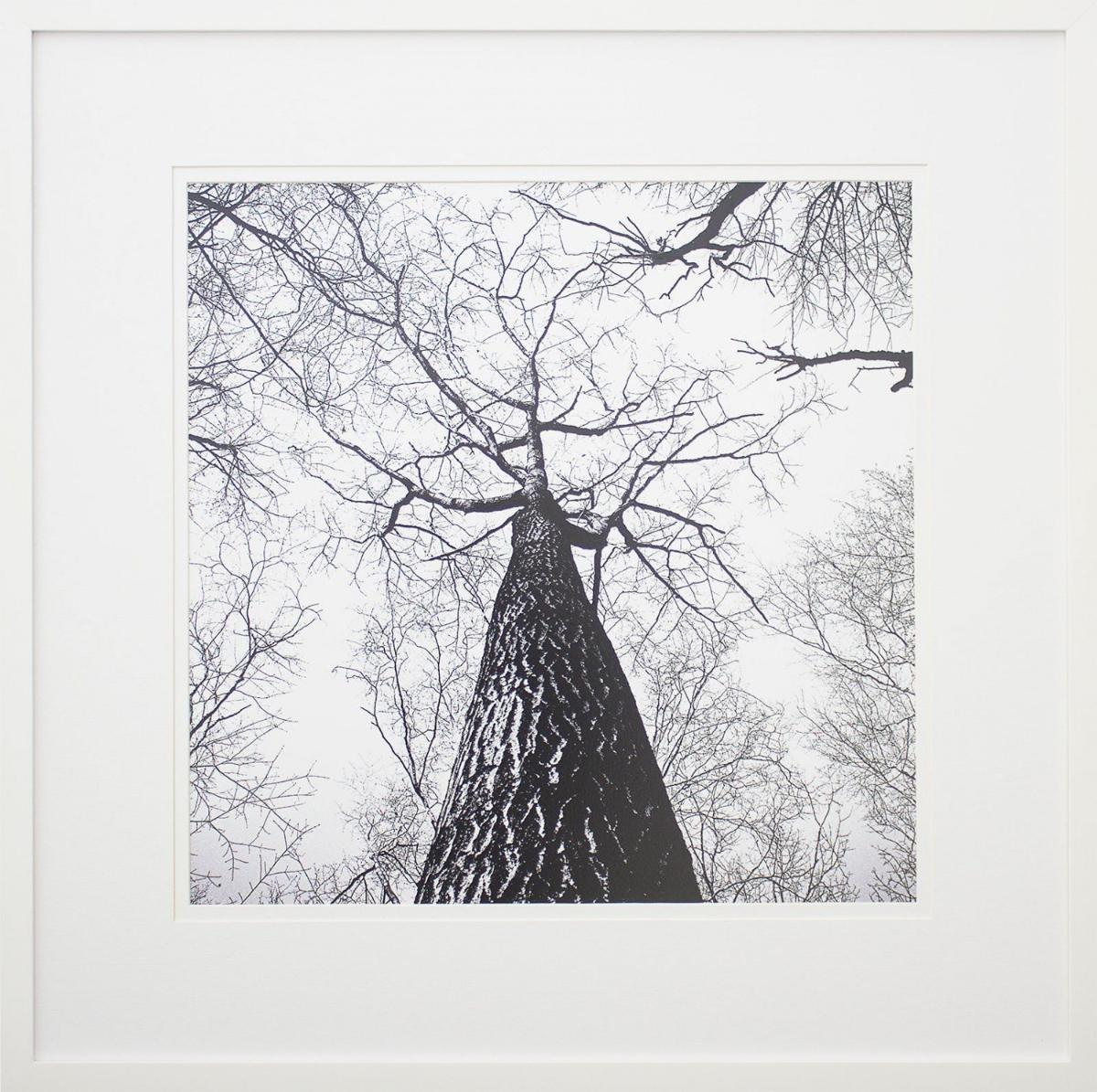 9e5b6cd79 quadro paisagem de inverno árvore em preto e branco 70x70cm. Carregando  zoom.