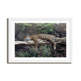 Quadro Sono Da Onca / Fotografia - Fine Art, Edição Limitada