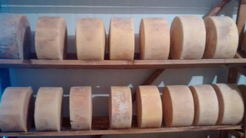 queijo parmesão de alagoa curado peça 5 kg
