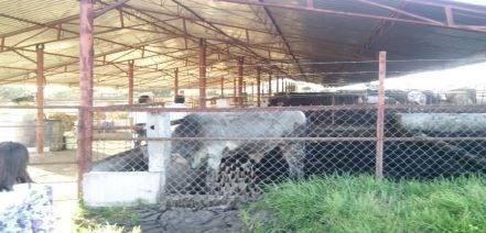 queretaro rancho 122 hectareas hermosisimo usd 11'000,000.- llamenos