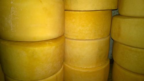 queso colonia precio por kilo por horma