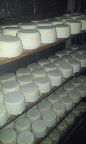 queso de campo artesanales x mayor