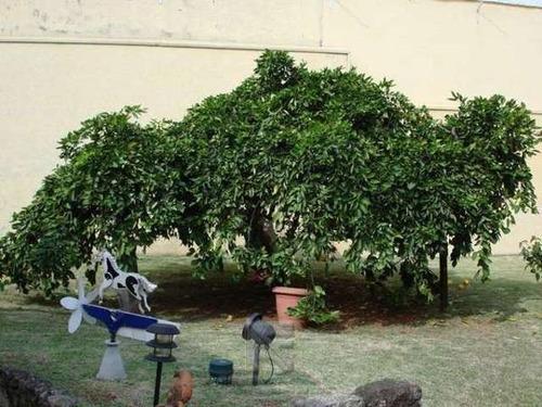 quintal arborizado + 5 vagas!!! - 0878-1
