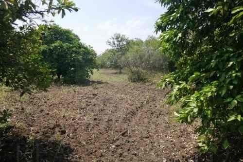 quintas en venta en los palmitos, cadereyta jiménez