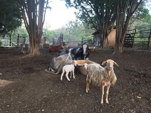 (ra) ótimos chalés c características rurais da vida no campo