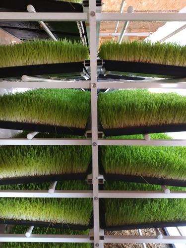 rack de forraje verde hidropónico