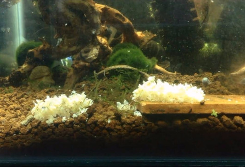 ração camarão shrimpsnacks snow flakes glasgarten 30g