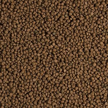 Ra o p carpas kinguios tropical koi wheat germ garlic for Alimento para carpas koi