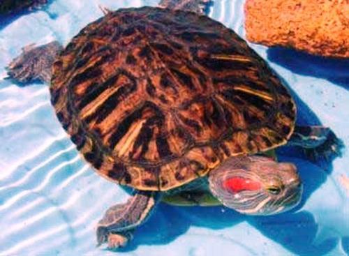 ração para tartaruga, todos os tipos c/ camarão e crustáceos