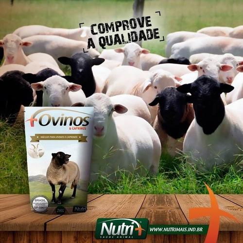 racoes caes sal matsuda. temos produtos nutri+.mais leite