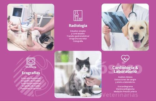 radiografia veterinaria  - ecografia perro gato microchip