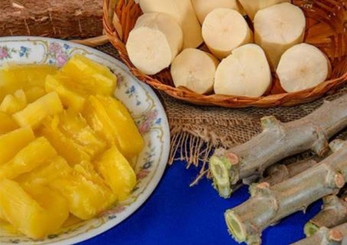 ramas de mandioca amarela sem fibras, kit 45 ramas!