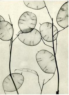 ramos de flores secas , flores de nacar , tamaño small